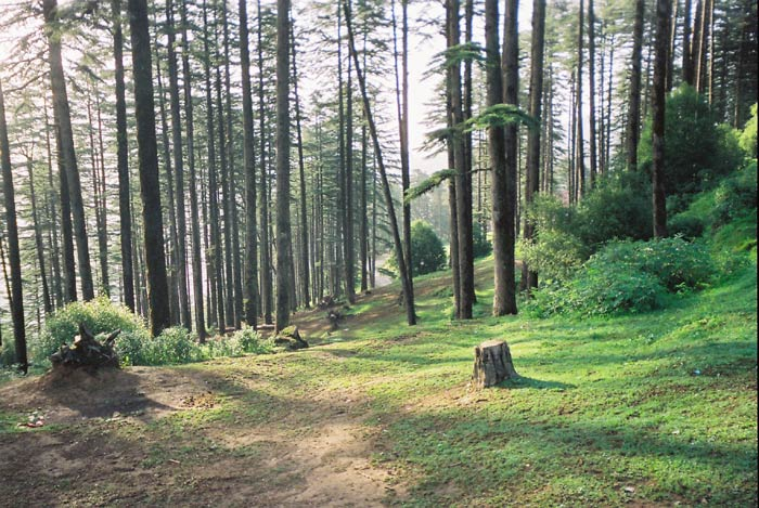 Image result for Dhanaulti mussoorie
